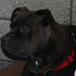Pets Web images