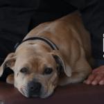 Pets Web images 2