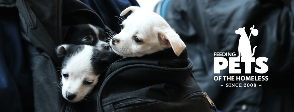 Puppies in a backpack with Feeding Pets of